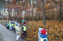 2019-11-19 - Pszczółki - Jesienny spacer